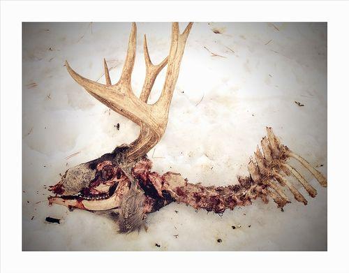 DeerkillC68x10