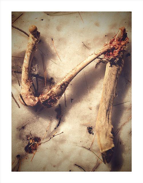 Deer Kill8x10_254A