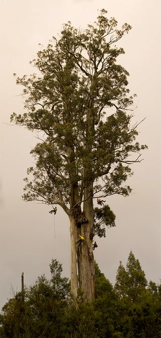 NGM study Treeweb